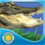 Alligator at Saw Grass Road