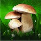 Mushrooms- Great Encyclopedia of Fungi (