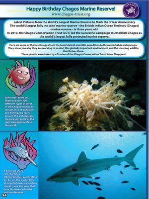 Sea Urchins magazine 4