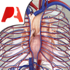 Pocket Anatomy Circulatory
