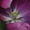 ILiveGrammar Botany