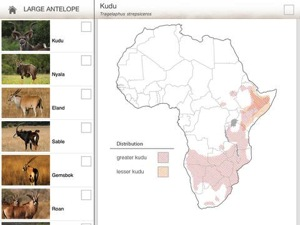 African Mammals HD 2