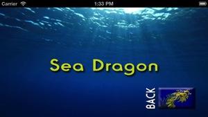 Sea Slugs  Stuff 2