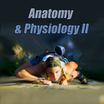 Anatomy  Physiology II