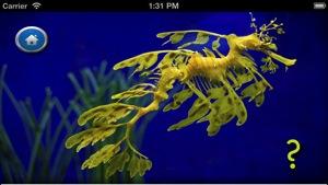 Sea Slugs  Stuff