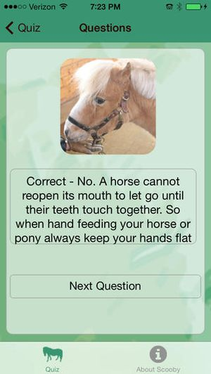 Around the World Pony Quiz 4