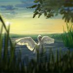 Where Do the Swans Sleep