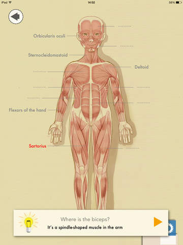 Muscles For Kids An Anatomy App For Elementary Aged Children Fun