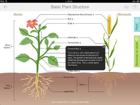 Focus on Plant 2