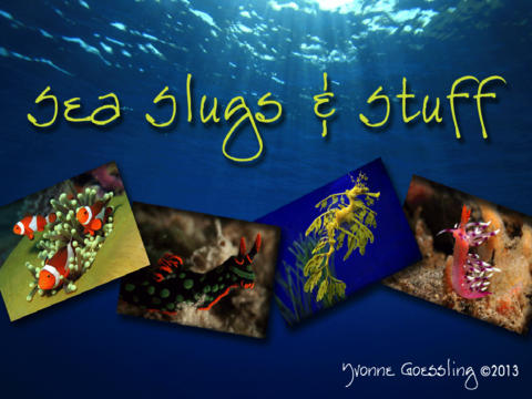Sea Slugs & Sea Stuff